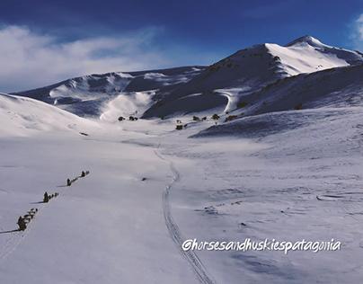 Aerial View - Horses and Huskies Patagonia