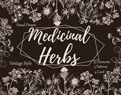 Hand drawn vector spices and herbs.