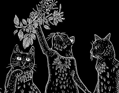 Cat Séance