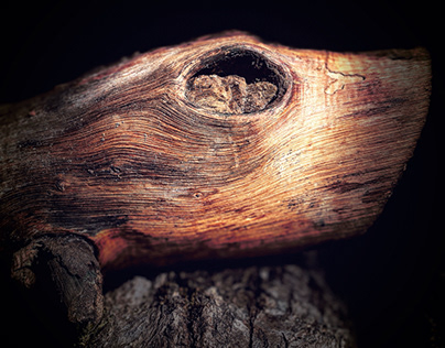 Le regard en bois