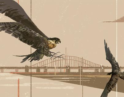 El halcón y el misionero