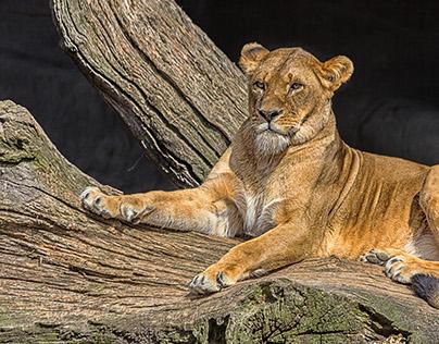 Hagenbecks Tierpark Hamburg