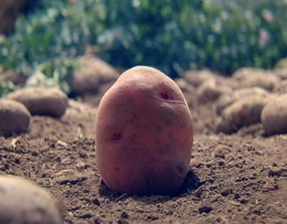 A potato's travel