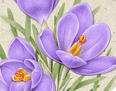 Botanical illustrations 2016-2019