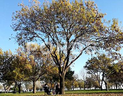 FOOTAGE:People Sitting Under Trees