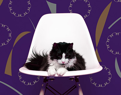 Moha Pet Clothing Brand eXperience Design