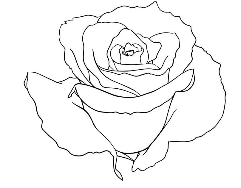 有創意感的19套玫瑰花水彩素描欣賞