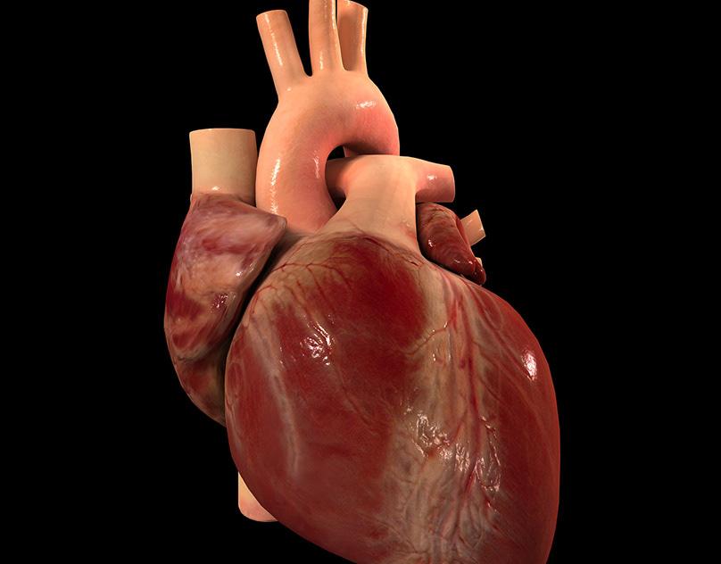 Бьющееся сердце анимация анатомия