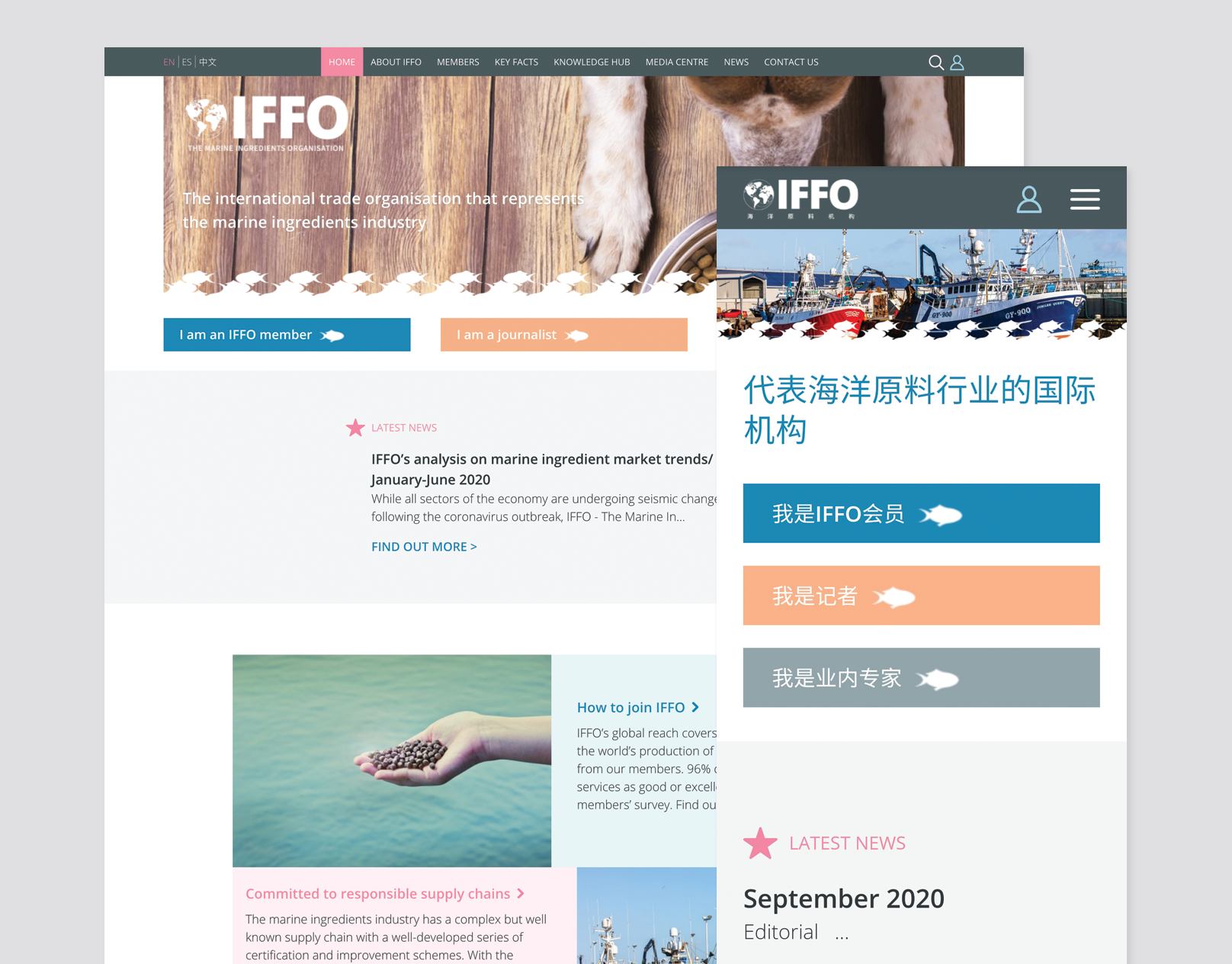 IFFO | Website Design
