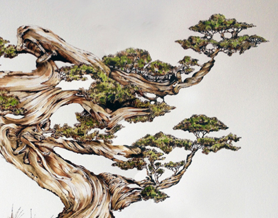 BONSAI MUGO PINE artists proof