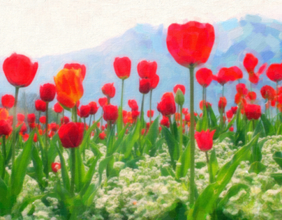 Poppies in highland