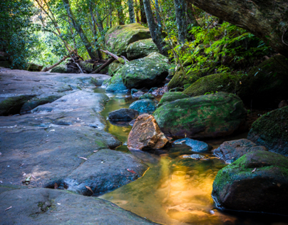 Forest Light - Ku-ring-gai National Park, Sydney