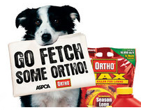 Go Fetch Some Ortho