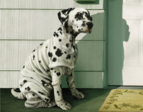 Pedigree Weightloss Dod Food - Wrinkled Dog Print