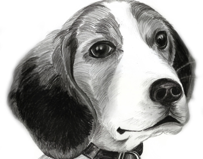 Dog Portrait 2