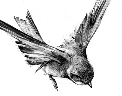 100 ways to draw a bird