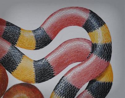 Serpente do Paraíso