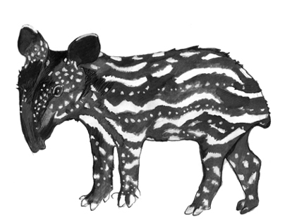 Because everyone loves a Tapir