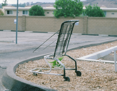 Shopping Carts, 2013