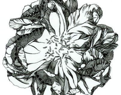 A Peony Illustrated