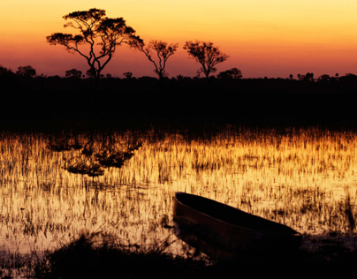 Okavango Golden Hour