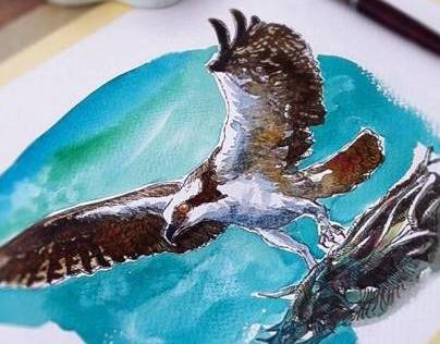 Watercolor birds-2