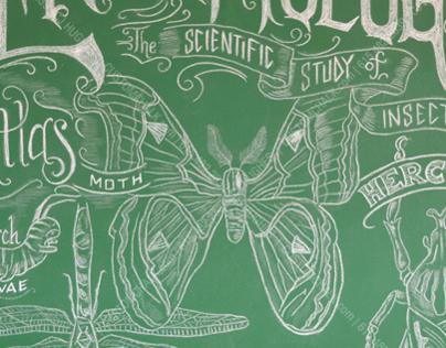 Entomology Chalk Art