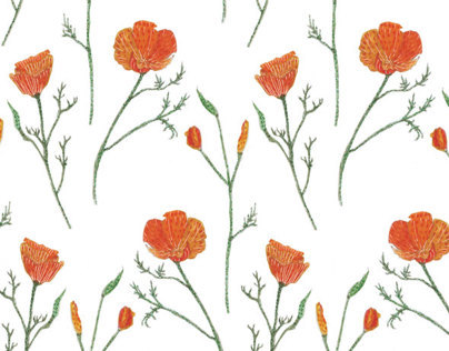 California Poppies Pattern