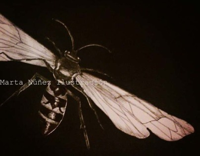 Wasp Waist Illustration
