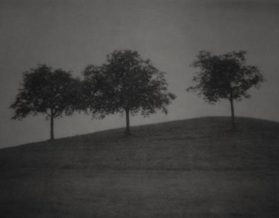 Landscapes & Stills II