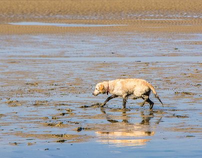 Muddy Walk for a lone dog