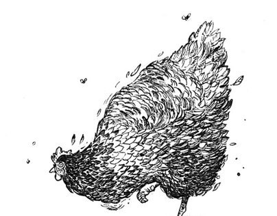 Chicken Project Part I: Pen Drawings