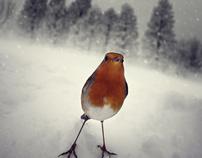 A hard winter...