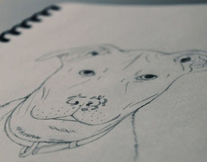 Pit Bull Illustration