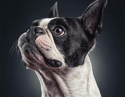 Dog Portraits by Daniel Sadlowski // Part 2