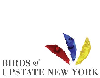 Birds of Upstate New York