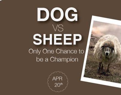 Poster - sheepdog championship