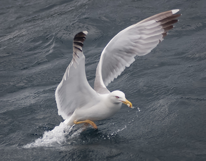 Sea Gulls (part 1)