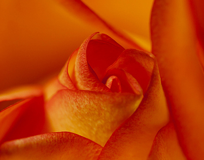 Macro photography - Orange by Chinh