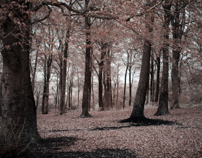 Infrared Autumn Walk