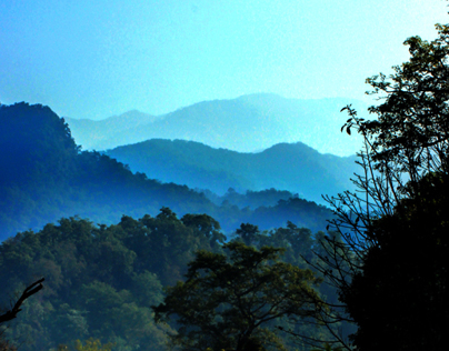 Early Morning at jim corbett
