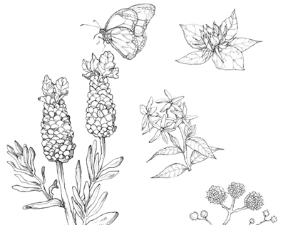 Jo Malone Fragrance Garden Illustrations.