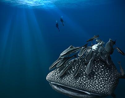 Whale Shark Encounter & Exploration