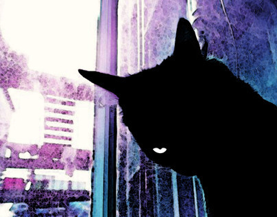 Black cat in purple light.