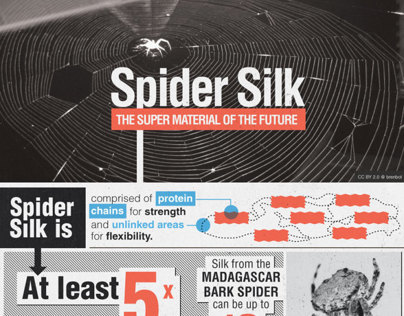 Spider Silk: The Super Material of the Future