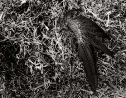 Icarus Fallen