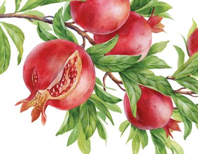 olive, pomegranate & orange