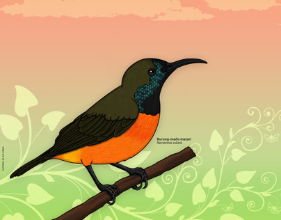 Birds Wallpaper for Burung Indonesia 2