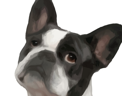 French Bulldog Oh my Dog Project
