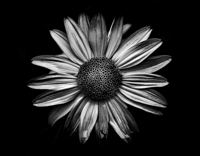 Backyard Flowers In Black And White 18